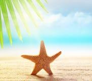 Estrellas de mar en la playa arenosa y la hoja de palma Fotografía de archivo