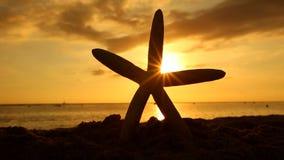 Estrellas de mar en la playa en el concepto de las vacaciones del viaje de la puesta del sol almacen de metraje de vídeo