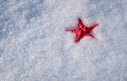 Estrellas de mar en nieve Fotografía de archivo