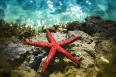 Estrellas de mar en piedra Fotografía de archivo