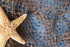 Estrellas de mar en red de pesca foto de archivo libre de regalías