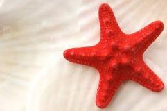 Estrellas de mar en seashells Imagenes de archivo