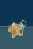 Estrellas de mar en un agua Imagenes de archivo