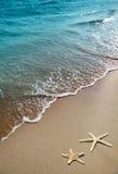 Estrellas de mar en una arena de la playa Imágenes de archivo libres de regalías