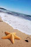 Estrellas de mar en una playa Imagen de archivo libre de regalías