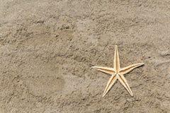 Estrellas de mar en una playa arenosa Fotografía de archivo libre de regalías