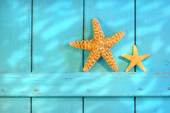 Estrellas de mar en una puerta rústica vieja Imagen de archivo libre de regalías