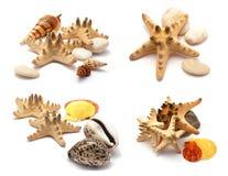 Estrellas de mar fijadas. Fotografía de archivo libre de regalías