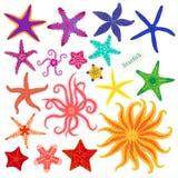 Estrellas de mar fijadas Estrellas de mar multicoloras en un fondo blanco Animal invertebrado subacuático de las estrellas de mar Imagen de archivo