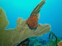 Estrellas de mar de la cesta Fotos de archivo libres de regalías