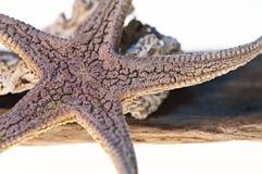 Estrellas de mar, madera, venas Imagen de archivo