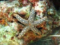 Estrellas de mar o estrellas de mar que viven debajo del mar Imagen de archivo