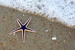 Estrellas de mar púrpuras en la playa Fotos de archivo