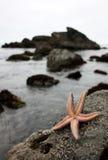 Estrellas de mar que agitan hola imágenes de archivo libres de regalías