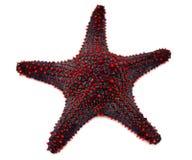 Estrellas de mar rojas Fotografía de archivo libre de regalías