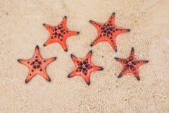 Estrellas de mar rojas en la arena blanca en la playa tropical soleada hotel de cinco estrellas por el concepto del mar Fotografía de archivo libre de regalías