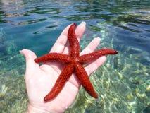 Estrellas de mar rojas en una mano Imagen de archivo libre de regalías