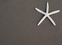 Estrellas de mar (seastar) Imágenes de archivo libres de regalías