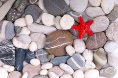 Estrellas de mar sobre los guijarros Fotos de archivo