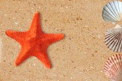 Estrellas de mar y cáscaras del Res en la arena amarilla fotografía de archivo libre de regalías