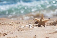 Estrellas de mar y cáscaras en la arena cerca del mar Imagenes de archivo