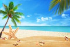 Estrellas de mar y cáscaras en la arena de la playa Playa y mar con la palma en fondo Fotos de archivo libres de regalías
