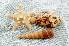 Estrellas de mar y concha de peregrino coloreadas en red de pesca Imagen de archivo libre de regalías
