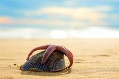 Estrellas de mar y concha marina en la arena contra la perspectiva de ondas chispeantes foto de archivo