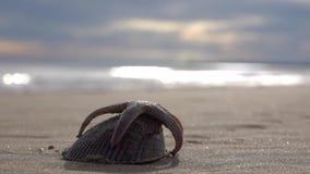 Estrellas de mar y concha marina en la arena contra la perspectiva de ondas chispeantes metrajes