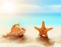 Estrellas de mar y concha marina en la playa Adultos jovenes Fotos de archivo