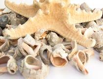 Estrellas de mar y conchas marinas Fotos de archivo libres de regalías