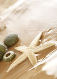 Estrellas de mar y echinus Imagen de archivo libre de regalías