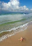 Estrellas de mar y la playa Imágenes de archivo libres de regalías