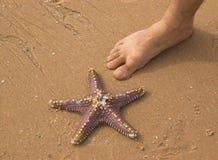Estrellas de mar y pie Imagenes de archivo