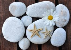 Estrellas de mar y piedras Imagen de archivo