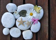 Estrellas de mar y piedras Foto de archivo libre de regalías
