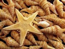 Estrellas de mar y primer de los shelles Foto de archivo libre de regalías