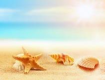 Estrellas de mar y seashells en la playa Adultos jovenes Fotos de archivo libres de regalías
