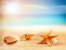 Estrellas de mar y seashells en la playa Adultos jovenes Foto de archivo