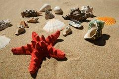 Estrellas de mar y shelles Imágenes de archivo libres de regalías