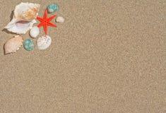 Estrellas de mar y shelles Imagen de archivo libre de regalías