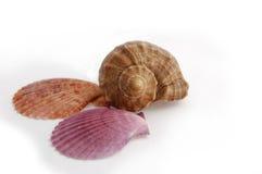 Estrellas de mar y shelles Fotos de archivo libres de regalías