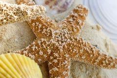 Estrellas de mar y shelles en la playa Foto de archivo libre de regalías
