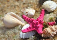 Estrellas de mar y shelles rosados en la playa Imagenes de archivo