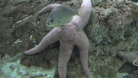 Estrellas de mar y vida marina metrajes