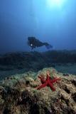Estrellas de mar y zambullidor en agua profunda Fotografía de archivo