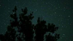 Estrellas de mudanza en cielo nocturno sobre árboles Lapso de tiempo almacen de metraje de vídeo