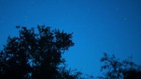 Estrellas de mudanza en cielo nocturno sobre árboles Lapso de tiempo almacen de video