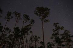 Estrellas del árbol de pino Imagenes de archivo
