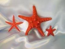 Estrellas rojas de los pescados Foto de archivo libre de regalías